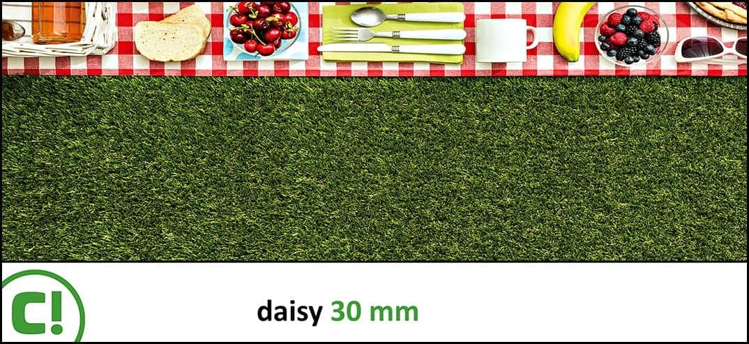 05 Daisy 30mm Titel 1074x493px 150dpi